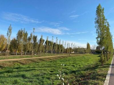 Banyoles completa la primera fase del nou Pla Director del Parc de la Draga