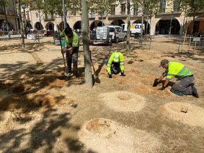 Banyoles executa una actuació de millora als arbres de la plaça Major