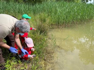El Consorci de l'Estany allibera 8 tortugues d'estany al Paratge de les Cigonyes de Banyoles