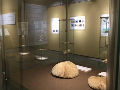 El Museu Darder de Banyoles dedica una exposició als coralls
